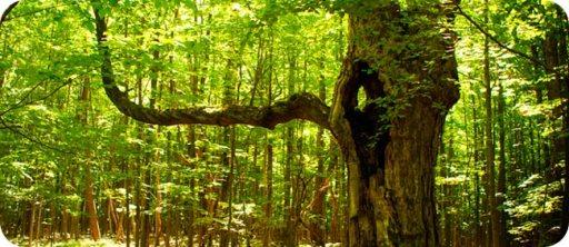65_CelticSymbolismOfTrees