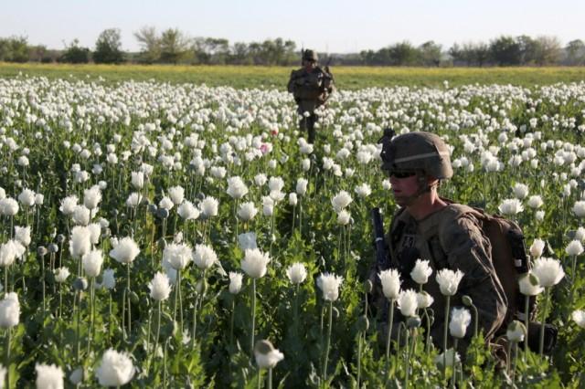 19_USNATO-poppies10-1024x682