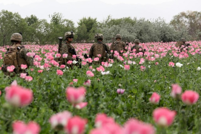 26_USNATO-poppies2-1024x682