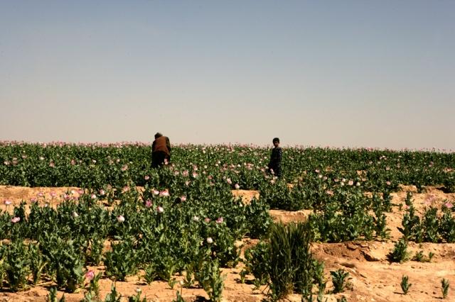 27_opium-fields-16
