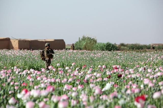 29_opium-fields-18