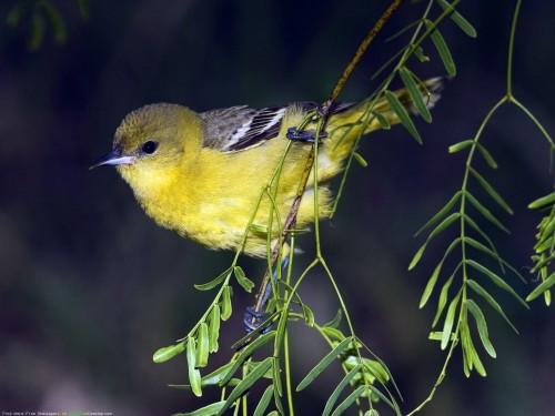 Lovely_Birds