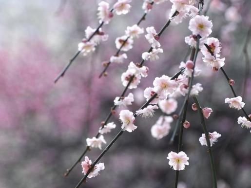 Bloom_Spring