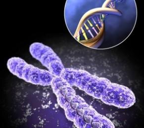 k5-DNK-300x268