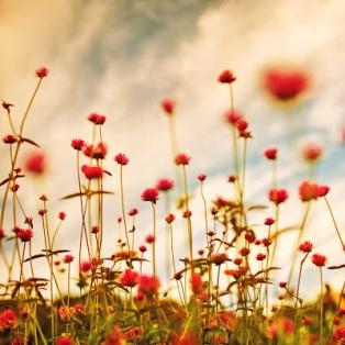 flowerish_meadow