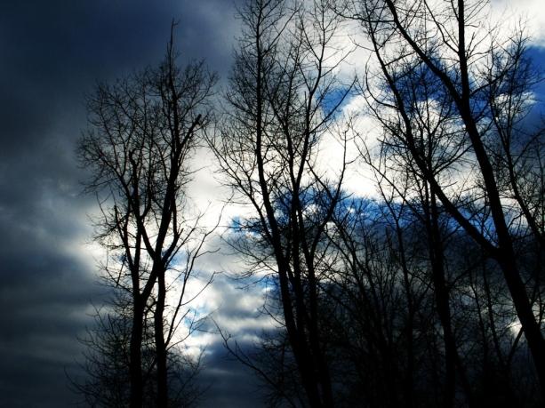 002_stromy
